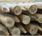 Round Timbers